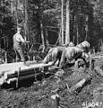 Photograph of Jim Lancour Draying Pulpwood to the Landing Along Haul Road - NARA - 2129138.jpg
