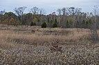 Pickerington Pond-Meadows around Arrowhead Marsh in Fall 2.jpg