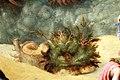 Piero di cosimo, perseo libera andromeda, 1510-13 (uffizi) 20 ceppo.jpg