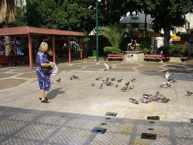 """האכלת יונים בכיכר רמב""""ם ברמת גן"""