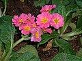 Pink Flowers Sacramento.jpg