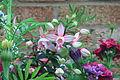 Pink fuchsia (7502913404).jpg