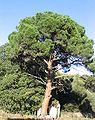 Pinparasol1.jpg