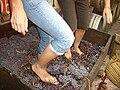 Pisada tardicional de uvas.jpg