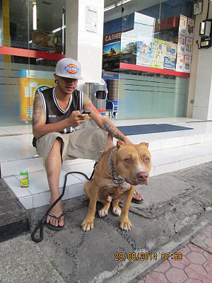 Pitbull with its owner in Ubud in Bali..JPG