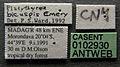 Platythyrea bicuspis casent0102930 label 1.jpg