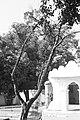 Pohon di depan Keraton.jpg