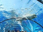Polar tunnel Detroit Zoo