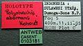 Polyrhachis aberrans casent0103181 label 1.jpg