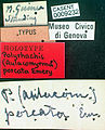 Polyrhachis porcata casent0009232 label 1.jpg