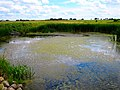Pond in Sun Prairie - panoramio.jpg