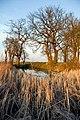 Pond near Folksworth - geograph.org.uk - 394030.jpg