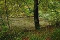Pool in Climperwell Wood - geograph.org.uk - 585732.jpg