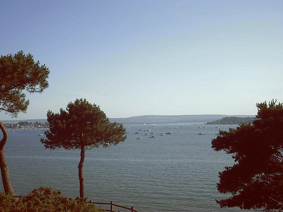 Poole harbour from hill less brownsea, tree in middel sunney