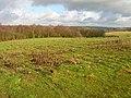 Popland Wood - geograph.org.uk - 344413.jpg