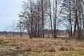 Popovychi Kovelskyi Volynska-Kulyky nature reserve-general view-3.jpg