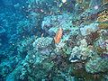 Port Ghalib march 2006-0193.jpg