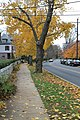 Princeton (8270043331).jpg