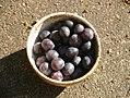 Prunus-insititia-fruits.JPG