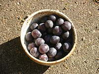 Prunus-insititia-fruits.JPG