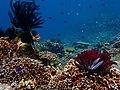 Puerto Galera underwater (2).jpg