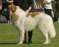 Pyrenean Mountain Dog.jpg