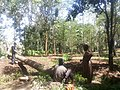Rachel the tireless tree planter, Kenya photo 8.jpg
