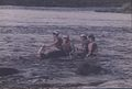 Rafting on the river Shannon (9424010330).jpg