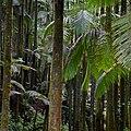 Rain Forest (24136673350).jpg
