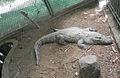 RajivGandhi Zoological Park (5).jpg