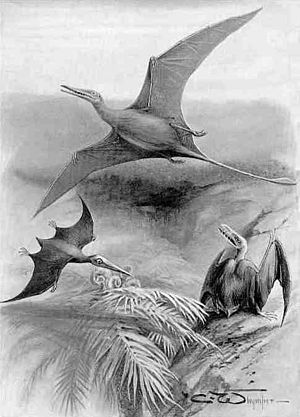 Scaphognathus - 1905 restoration of Scaphognathus (right) and other pterosaurs