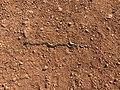 Rattlesnake 21 22 24 565000.jpeg