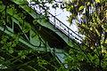 Ravenna Park Bridge 11.jpg