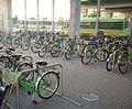 Rental bikes Poznan.jpg