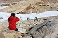 Researching Adélie penguin JARE 01.jpg
