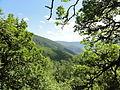 Reserva Natural Integral de Muniellos (Asturias, España) 12.JPG