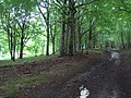 Restricted byway, Stony Hill near Chicklade 2 - geograph.org.uk - 468070.jpg