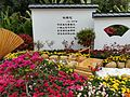 Rhododendron in Mount Wutong of Shenzhen, picture3.jpg