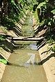 Rice fields water canal in Bohol.jpg