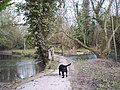 River Wylye at Sherrington - geograph.org.uk - 327185.jpg