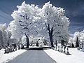 RocSnow Infrared Cemetery Trees (17215478494).jpg
