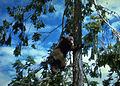 Rogue River Wildlife (15939674901).jpg