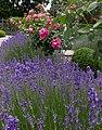 Rosarium Baden Doblhoffpark Gartenanlagen 14.jpg