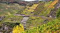 Rotweinwanderweg bei Mayschoss 2.jpg