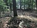 Rubkow Großsteingrab Kuhbergholz (8).jpg