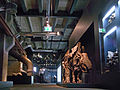 Ruhrmuseum - 12 Meter Ebene - Wollnashorn100530.jpg