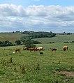 Rural scene north of Tugby - geograph.org.uk - 884721.jpg