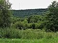 Saint-Sulpice-le-Guérétois vue sur forêt Chabrières depuis RD 914 (3).jpg