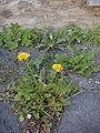 Salaude tchamps florins.jpg
