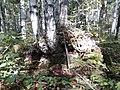 Salavatskiy r-n, Respublika Bashkortostan, Russia - panoramio (1).jpg